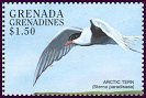 Cl: Arctic Tern (Sterna paradisaea)(Out of range)  SG 2590 (1998)