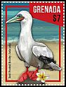 Cl: Red-footed Booby (Sula sula) new (2016)