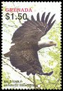Cl: Bald Eagle (Haliaeetus leucocephalus)(Out of range)  SG 5018b (2004)  [3/49]