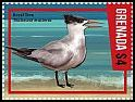 Cl: Royal Tern (Sterna maxima) new (2016)
