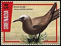 Cl: Brown Noddy (Anous stolidus) new (2016)