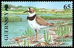 Cl: Little Ringed Plover (Charadrius dubius) SG 894 (2001)