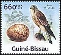 Cl: Eurasian Kestrel (Falco tinnunculus)(Repeat for this country)  new (2013)  [9/16]
