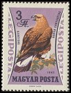 Cl: Golden Eagle (Aquila chrysaetos) <<Szirtisas>>  SG 1857 (1962) 65 [2/2]