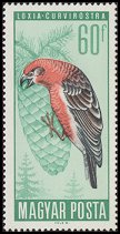 Cl: Red Crossbill (Loxia curvirostra)(Repeat for this country)  SG 2186 (1966) 10 [2/2]