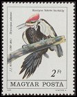 Cl: Pileated Woodpecker (Dryocopus pileatus)(Out of range)  SG 3637 (1985)  [2/2]