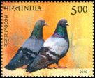 Cl: Rock Pigeon (Columba livia) SG 2729 (2010)  [6/49]