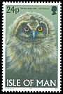 Cl: Short-eared Owl (Asio flammeus) SG 735 (1997)