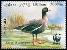 Cl: Lesser White-fronted Goose (Anser erythropus) SG 3403a (2015)  [10/5]