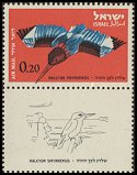 Cl: White-throated Kingfisher (Halcyon smyrnensis) SG 245 (1963) 15 [2/24]