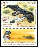 Cl: Egyptian Vulture (Neophron percnopterus) new (2013)  [5/15]