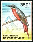 Cl: Rosy Bee-eater (Merops malimbicus) new (2014)  [9/9]