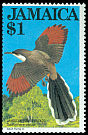 Cl: Jamaican Lizard-Cuckoo (Saurothera vetula)(Endemic or near-endemic)  SG 569 (1983) 110