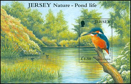 Cl: Common Kingfisher (Alcedo atthis) SG 997 (2001)  [9/18]
