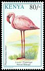 Cl: Lesser Flamingo (Phoenicopterus minor) <<Heroe Mdogo>>  SG 602 (1993) 160