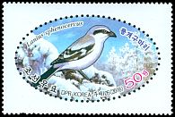 Cl: Chinese Grey Shrike (Lanius sphenocercus) new (2016)  [10/14]