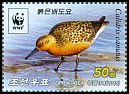 Cl: Red Knot (Calidris canutus) new (2015)  [10/10]