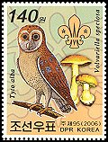 Cl: Barn Owl (Tyto alba)(Out of range)  new (2006)  [5/29]