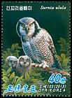 Cl: Northern Hawk Owl (Surnia ulula) new (2013)  [5/48]