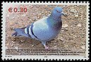 Cl: Rock Pigeon (Columba livia) new (2006)  [5/31]
