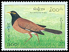 Cl: Common Myna (Acridotheres tristis) SG 1436 (1995)