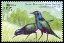 Cl: Greater Blue-eared Glossy-Starling (Lamprotornis chalybaeus)(Out of range)  new (2001)  [2/4]