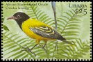Cl: African Black-headed Oriole (Oriolus larvatus)(Out of range)  new (2001)  [2/10]