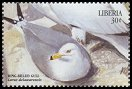 Cl: Ring-billed Gull (Larus delawarensis)(Out of range)  new (1999)