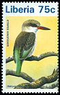 Cl: Striped Kingfisher (Halcyon chelicuti) new (1996)