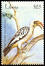 Cl: Eastern Yellow-billed Hornbill (Tockus flavirostris)(Out of range)  new (2001)  [2/31]