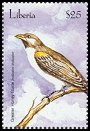 Cl: Greater Honeyguide (Indicator indicator) new (2001)  [2/25]