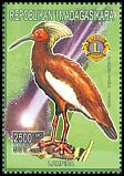 Cl: Madagascar Ibis (Lophotibis cristata)(Endemic or near-endemic)  new (1999)