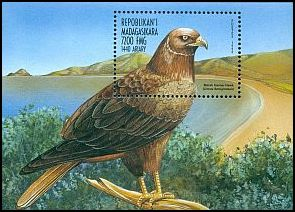 Cl: Reunion Harrier (Circus maillardi)(Endemic or near-endemic)  new (1999)