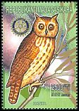 Cl: Madagascar Long-eared Owl (Asio madagascariensis) new (1999)