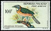 Cl: Pitta-like Ground-Roller (Atelornis pittoides) SG 65 (1963) 475