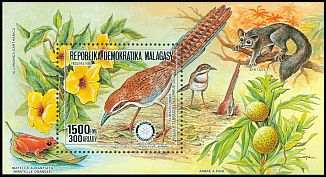 Cl: Long-tailed Ground-Roller (Uratelornis chimaera)(Endemic or near-endemic)  SG 677 (1988) 550