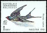 Cl: Barn Swallow (Hirundo rustica)(not catalogued)  (1991)