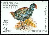 Cl: Purple Swamphen (Porphyrio porphyrio)(not catalogued)  (1991)