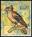 Cl: Madagascar Serpent-Eagle (Eutriorchis astur)(not catalogued)  (1991)