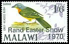 Cl: Grey-headed Bushshrike (Malaconotus blanchoti)(Repeat for this country)  SG 350 (1970) 50