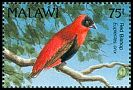 Cl: Red Bishop (Euplectes orix) SG 876 (1992) 225