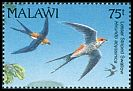 Cl: Lesser Striped-Swallow (Cecropis abyssinica) SG 877 (1992) 225