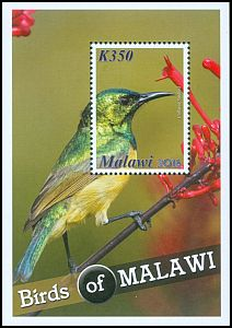 Cl: Collared Sunbird (Hedydipna collaris) SG 1136 (2016) 160 [10/18]