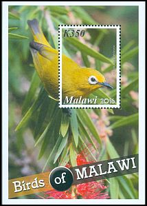 Cl: African Yellow White-eye (Zosterops senegalensis) SG 1137 (2016) 160 [10/18]