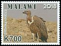 Cl: White-rumped Vulture (Gyps bengalensis)(Out of range)  new (2018)  [11/51]