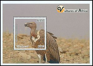 Cl: White-rumped Vulture (Gyps bengalensis)(Repeat for this country)  new (2018)  [11/51]