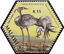 Cl: Blue Crane (Grus paradisea)(Out of range)  SG 1031f (2005) 75 [3/54]