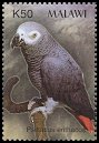 Cl: Grey Parrot (Psittacus erithacus)(Out of range)  SG 1018b (2003) 150 [2/6]