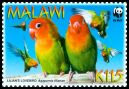 Cl: Lilian's Lovebird (Agapornis lilianae)(Endemic or near-endemic)  SG 1044 (2009) 200 [6/26]