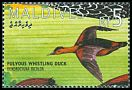 Cl: Fulvous Whistling-Duck (Dendrocygna bicolor)(Out of range)  SG 2169 (1995)